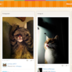 Catmoji, un Pinterest pour les chats ! – Catmoji est sans fioriture des photos d