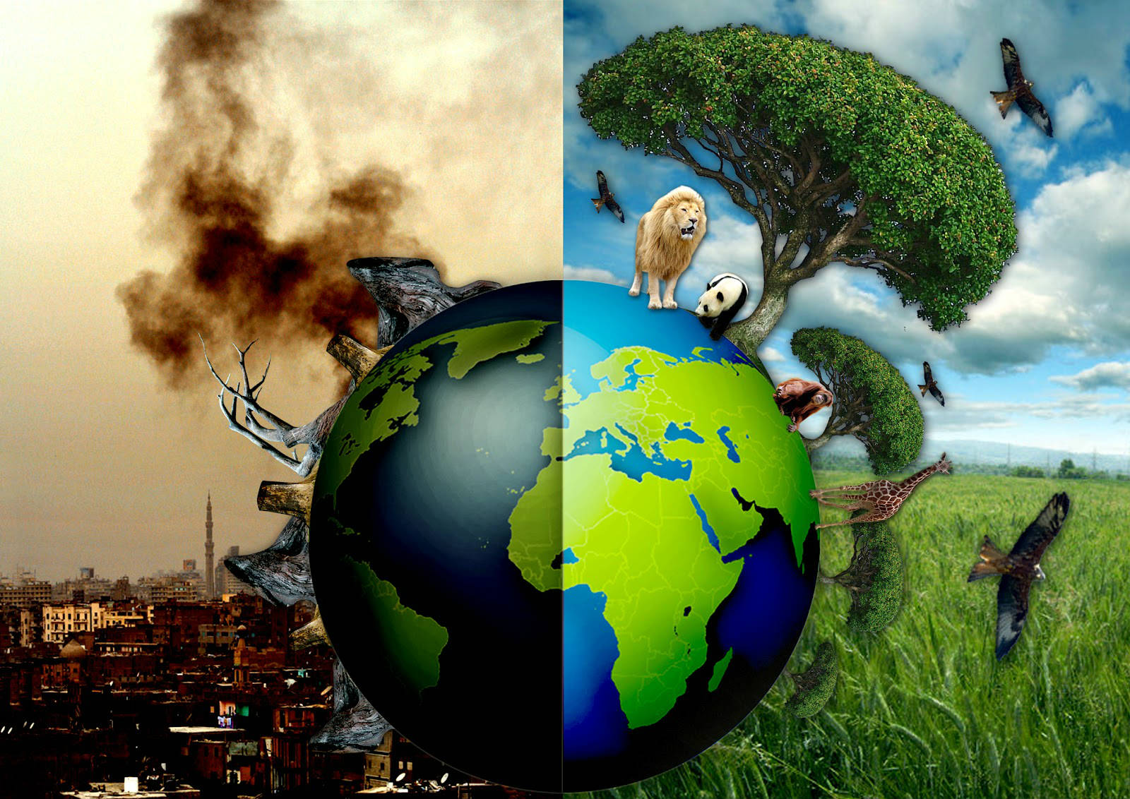 L'UICN célèbre la Journée mondiale de l'Environnement le 5 juin 2017