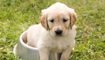puppy-1207816_1920